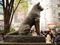 Vì sao người Nhật dựng bức tượng về chú chó Hachiko?